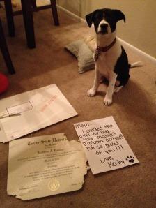 dunthor dog shame diploma