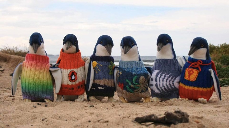 Stuffed toy penguins displaying the sweaters at Phillip Island. Credit: Huffington Post
