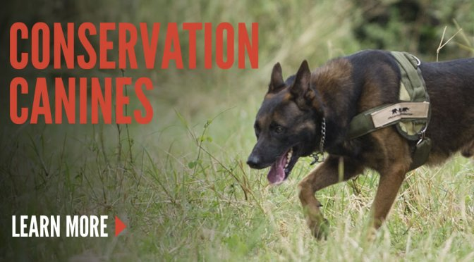 Conservation Canines | AWF Yearbook