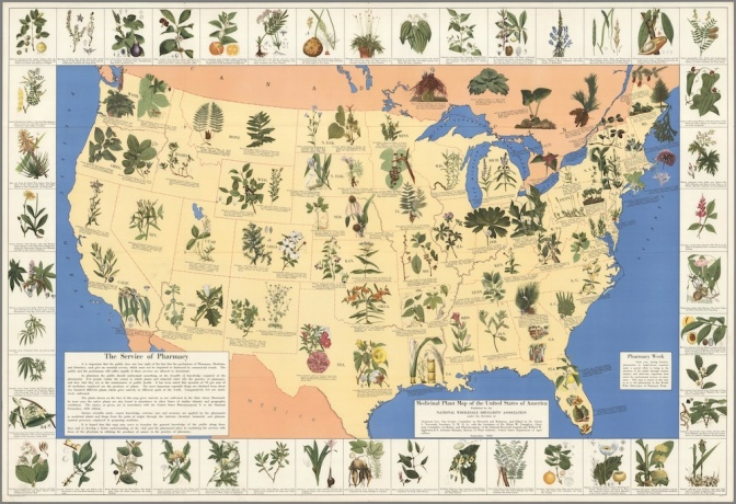 1932 Map of the medicinal plants in the United States
