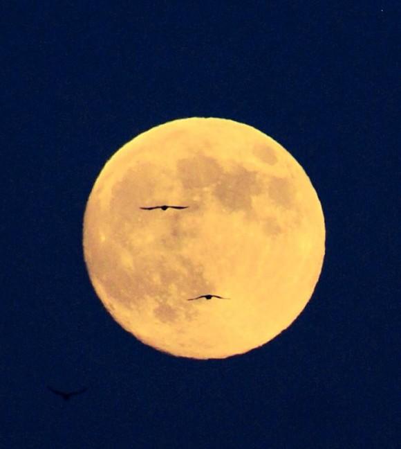 harvest-moon-japan-e1410198718297